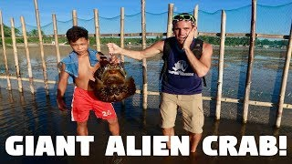 GIANT STRANGE ALIEN CRABS IN THE PHILIPPINES! (Scary Horseshoe Crabs)