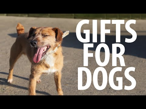 0 Giving Gifts to Homeless Dogs