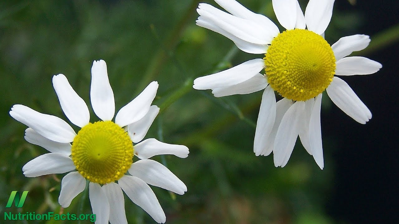 Chamomile Tea May Not Be Safe During Pregnancy