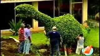 Conozca un parque de figuras de árboles