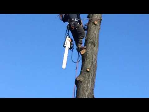 Dublin Tree services Company | Abatis Dublin Tree Services | felling