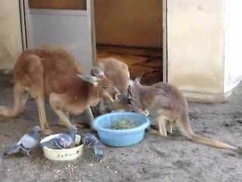 ハッチ家族 in 須坂市動物園