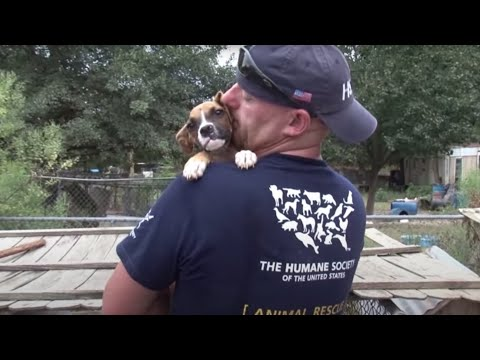 South Carolina Puppy Mill Rescue