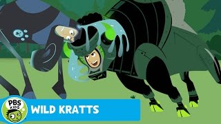 WILD KRATTS   Antlers and Horns   PBS KIDS