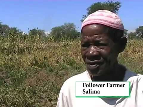 Climate change adaptation and neglected crops in Malawi-  PR219