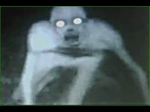 THE RAKE CREATURE CAUGHT ON TAPE