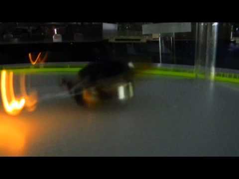 Single Motor Random Robot workshop