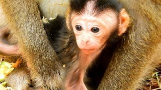 Welcome new baby monkey!! Diamond monkey just give new birth, Amber group 18-01-19
