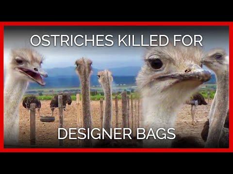 Ostriches Killed for Hermès, Prada Bags