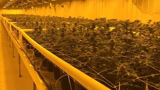 Take a tour of  the Aurora Cannabis production facility (in 4K)