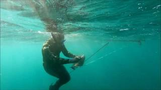 Spearfishing: Thanks to our fellow Schmidt Heads!