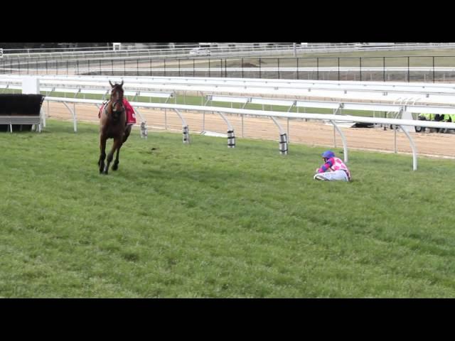 The fall of Lucky Lurch - Mornington Racetrack 2012