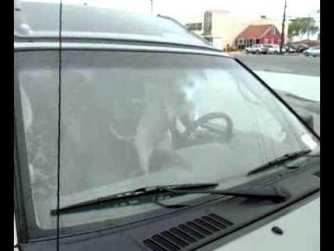 Coches - Perro pitando impaciente desde un coche