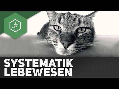 Was Ist Systematik?! - Die Raffinierte Einteilung Der Lebewesen