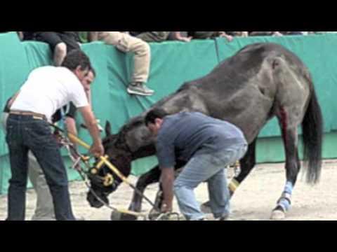 Basta maltrattare gli Animali! Sono nostri amici!