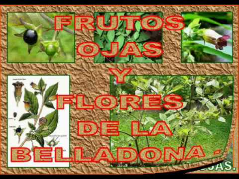 Las plantas venenosas de nuestro entorno ii youtube for Como se llaman las plantas ornamentales