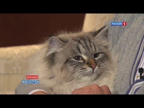Кот Путина обрёл хозяина / プーチン露大統領の猫が秋田県に到着 / Putin's gift cat finally meets Japanese owner