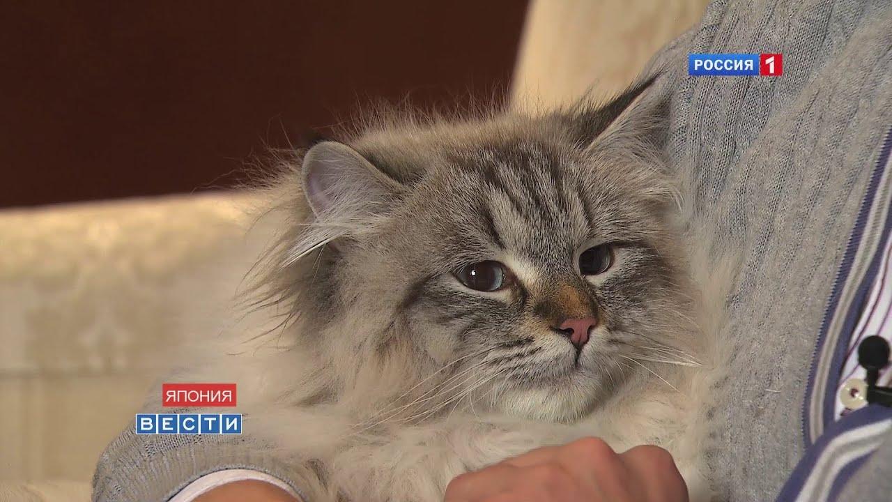 Кот мир подарок путина фото