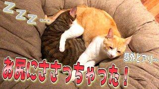 猫のお尻に猫が突き刺さってたんですけど…