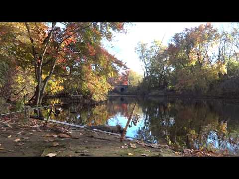 Fall Carping at Audubon Lake (Haddon Heights, NJ)