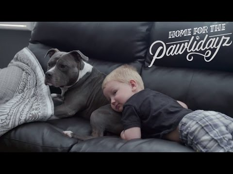 4 Great Reasons to Adopt a Pit Bull Terrier