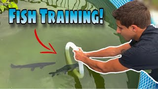 How To TRAIN your PET Fish and Turtles!