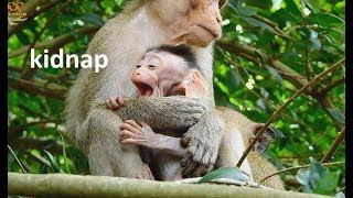 So Pity Newborn Baby ! Small Monkey Catch & Bite Baby| Young Mom Pull Hard get baby Back.
