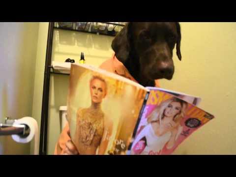 Perros - Un día normal dentro de la vida de un perro