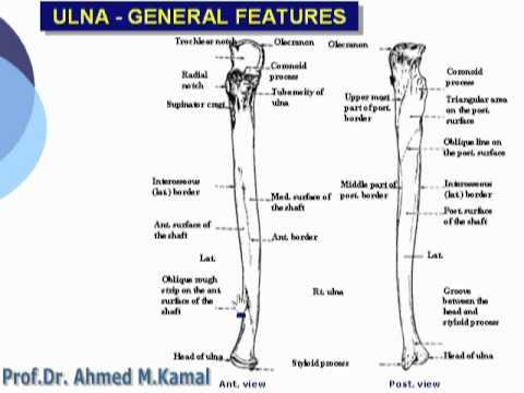 Upper limb anatomy videos