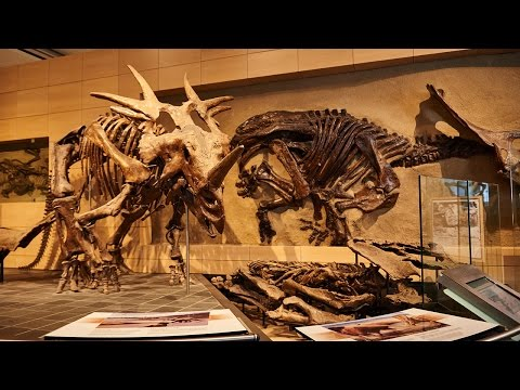 Canadian Museum of Nature | Ottawa Tourism