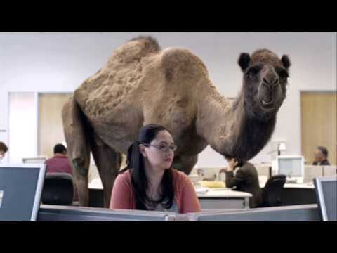 Camel Hump Day Cigarettes Camel Hump Day Commercial