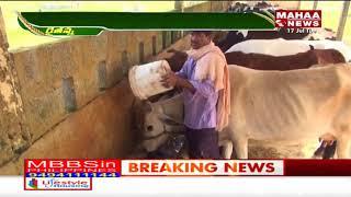 లక్షల రాయితీపై పశువుల పంపిణీకి సన్నాహాలు... | Mahaa Raithu Anna