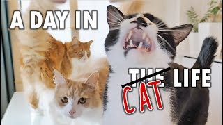 A day in the life of our cats