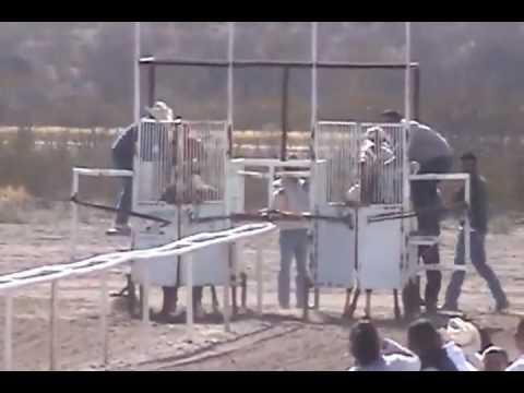 Carreras de Caballos La Cruz Chihuahua la Reyna vs La Chana
