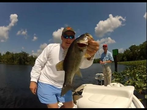 St. Johns River Florida Bass Fishing