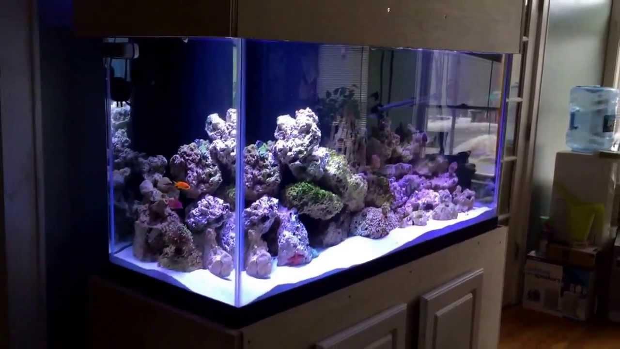 90 Gallon Aquarium : 90 gallon reef aquarium - YouTube