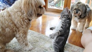 Very FUNNY ANIMAL VIDEOS - Ultra HARD TRY NOT TO LAUGH challenge