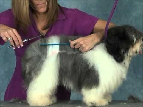 How to Groom:  Havanese  Jodi Murphy Instructional Series DVD