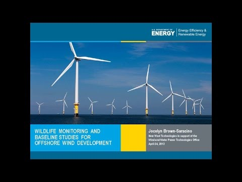 Wildlife Monitoring and Basline Studies for Offshore Wind Development Webinar