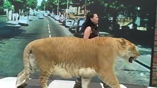 Top 10 Animais Incrivelmente Gigantes