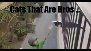 Cats Are Bros Too yo!