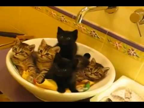 Kittens Follow The Leader