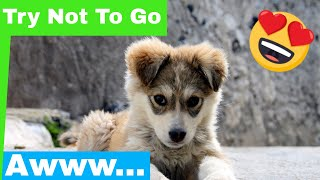 Cute Puppy Compilation 2019 - Try Not To Go Awww