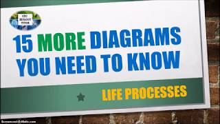 15 MORE DIAGRAMS YOU NEED TO KNOW| CXC Biology Tutor