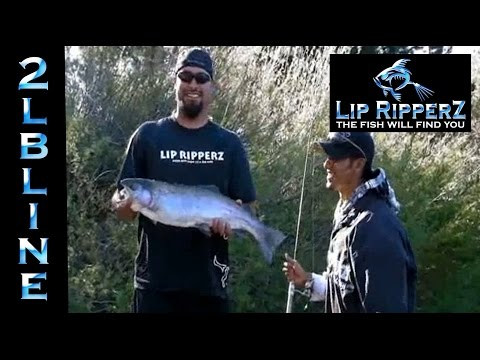 SHOCKING Footage. Lip RipperZ gets DEMOLISHED by Big Trout