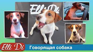 Приколы c собаками. Говорящая собака, собака разговаривает и просит. Elli Di.