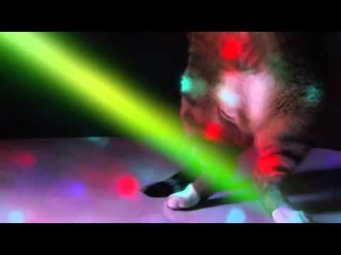 Meow Mix Song - Ashworth [[dvj Komanche Video Remix]] video
