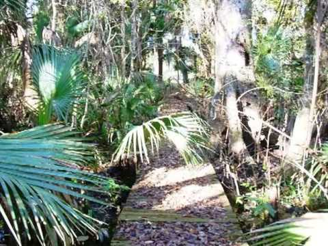 Homes for Sale - 00 Mount Royal Avenue Welaka FL 32193 - Debra Nicholson