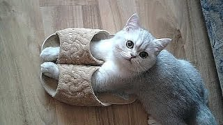 Best Funny cat and kitten - TOP Funniest cats in the world videos Compilation 2016
