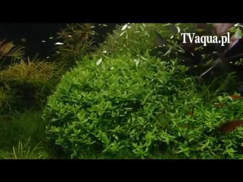 Stříhání rostlin